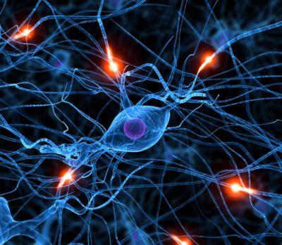 20110311_brain wiring