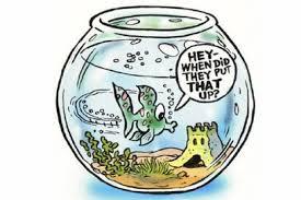 forgetful fish
